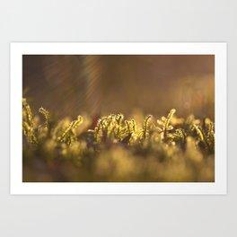 Morning Rays Art Print