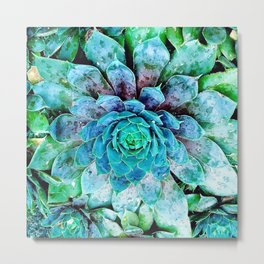 Hens & Chicks Succulent Mini iii Metal Print
