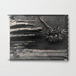 Dandelion by Jean-François Dupuis Metal Print