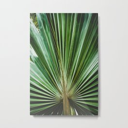 Aged & Colorized Wide Palm Leaves 2 Nature / Botanical Photograph Metal Print