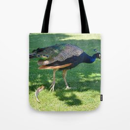 Peacock in the park Tote Bag