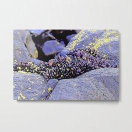 Nature's Secrets Metal Print