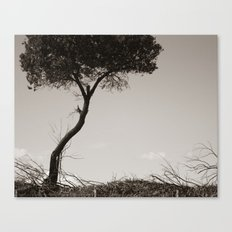 How's the Serenity? Canvas Print