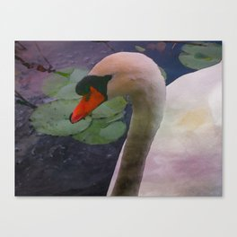 Mute Swan - Water Color Canvas Print