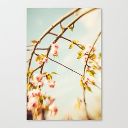 Cut through the Garden V Canvas Print