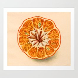 Tangerine (art from 1905 agricultural yearbook) Art Print