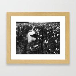 Cotton in Black & White Framed Art Print
