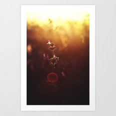 Phi // The Golden Ratio Art Print