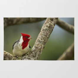 Red Crested Cardinal Rug