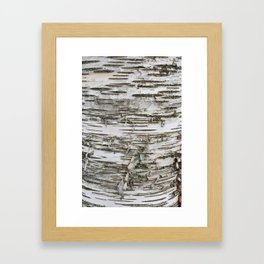 Birch Tree 2 Framed Art Print