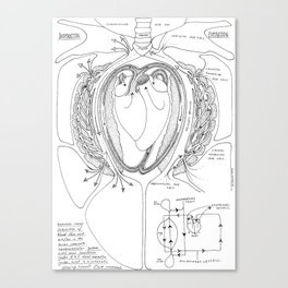 Avian Respiratory System, B&W Canvas Print