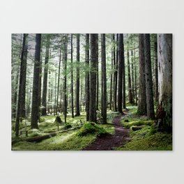 Royal Basin Trail, Olympic National Park (Landscape) Canvas Print