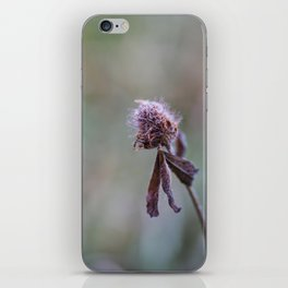 Frost on the Clover iPhone Skin