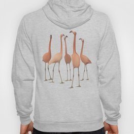 Flamingo Mingle Hoody