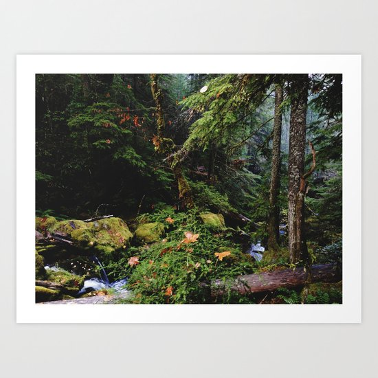 Late Fall Forest Art Print