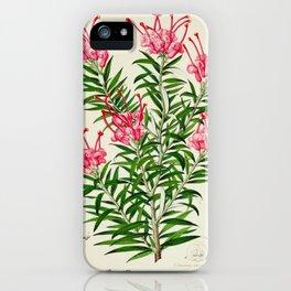 Grevillea Rosea Vintage Botanical Floral Flower Plant Scientific Illustration iPhone Case