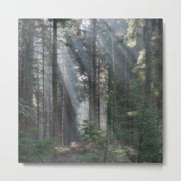 Spruce Wood Sunbeams Metal Print