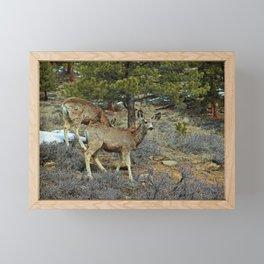 Mule Deer Framed Mini Art Print