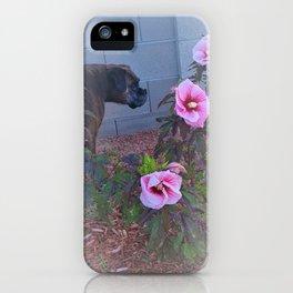 Sweet Dog Meanders Around Pink Hibiscus iPhone Case