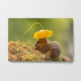 squirrel sun hat Metal Print