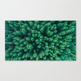 Forest from above Canvas Print