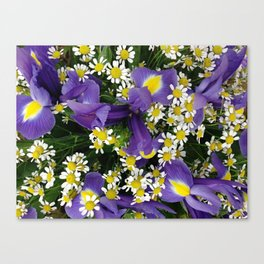 Ultra violet iris flowers and white chamomiles Canvas Print