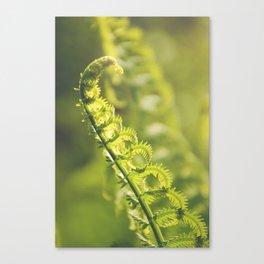 AFE Fern Canvas Print