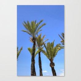 Paradise Palm Tress Canvas Print