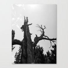 tree film Canvas Print