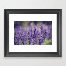 Lovely Lavender Framed Art Print