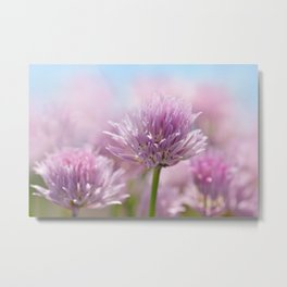 Allium pink macro 303 Metal Print