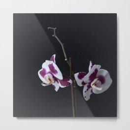ultra violet orchid Metal Print
