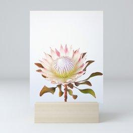 King Protea Mini Art Print