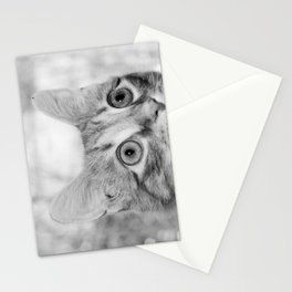 What's New KittyCat Stationery Cards