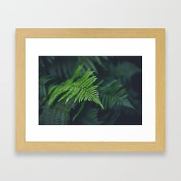 fairy fern Framed Art Print