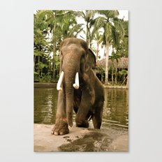 Magnificent Beast Canvas Print