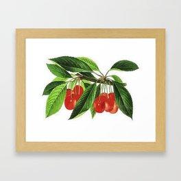 Red Cherries Vector on White Background Framed Art Print