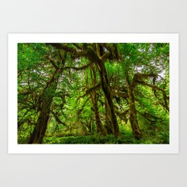 Hall of Mosses - Olympic National Park Art Print