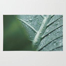 Elephant Ear Leaf still life, fine art print, high quality macro, water drops photography Rug