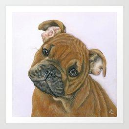 Belle The Baby Bulldog Art Print