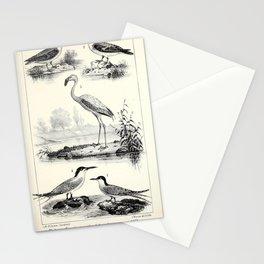 018 phalaropus hyperboreus Grey Phalarope phalaropus platyrhynchus Greater Flamingo phoenicopterus roseus Sandwich Tern sterna cantiaca Common Tern sterna hirundo6 Stationery Cards