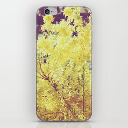 yellow flower - Forsythia iPhone Skin