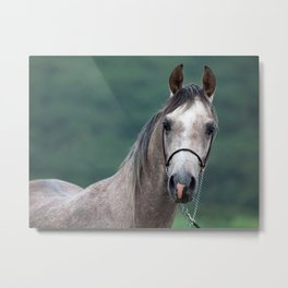 horse collection. arabian grey Metal Print
