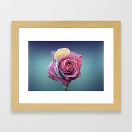 The beauty of a rose Framed Art Print