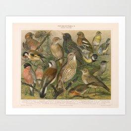 Song Birds • Antique Print Caged Birds • Stubenvögel 1 Art Print