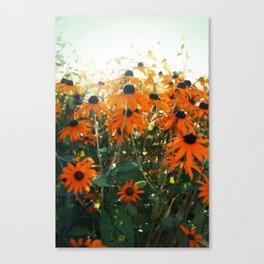 Bleached Canvas Print