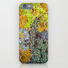 Wall of Succulents Slim Case iPhone 6s