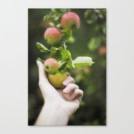 Picking Apples Canvas Print