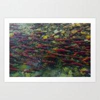 Kokanee Salmon Art Print