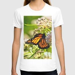 Monarch Beauty T-shirt
